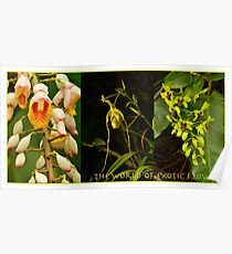 The World of Exotic Flowers Poster