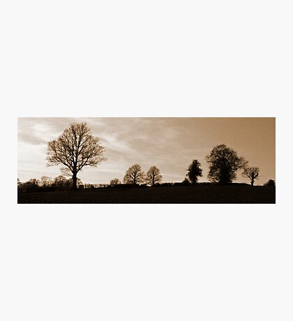 Hedgerow Trees Photographic Print