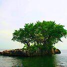 A Very Small Island by Wayne Gerard Trotman