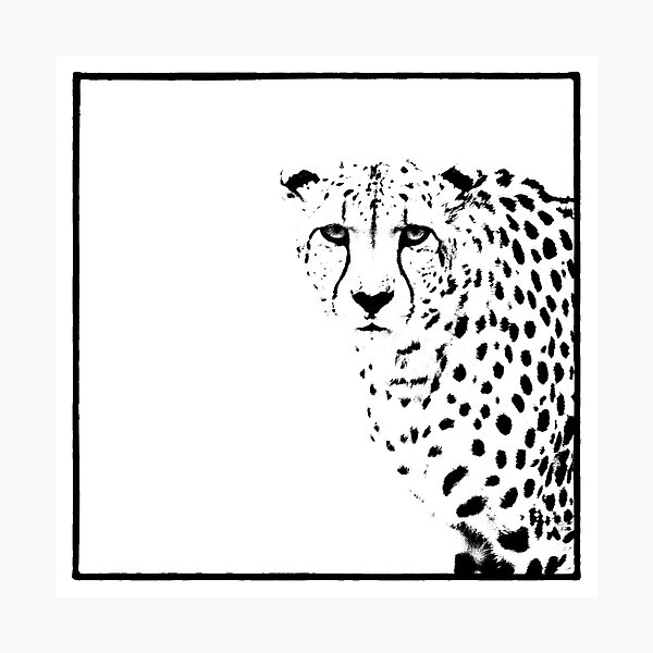 Cheetah Photographic Print