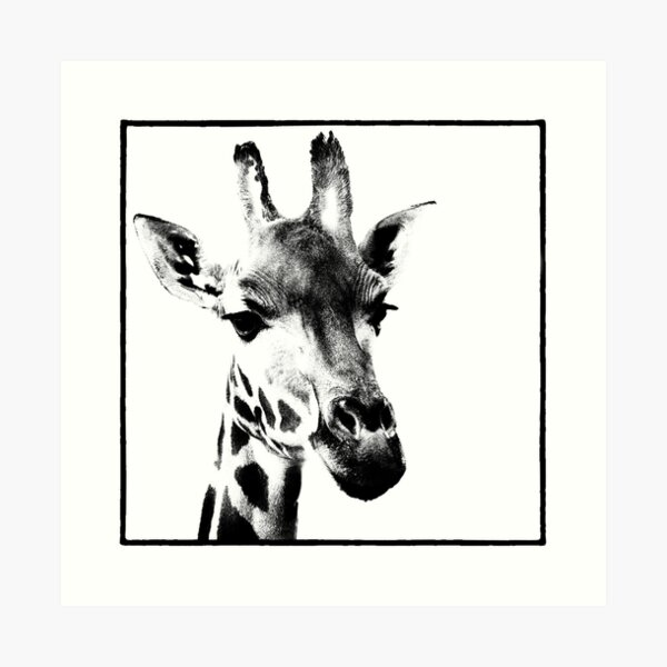 Gentle Giraffe Art Print