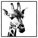 Gentle Giraffe by Wendi Donaldson Laird