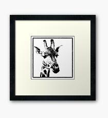 Gentle Giraffe Framed Print