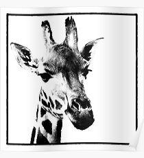 Gentle Giraffe Poster