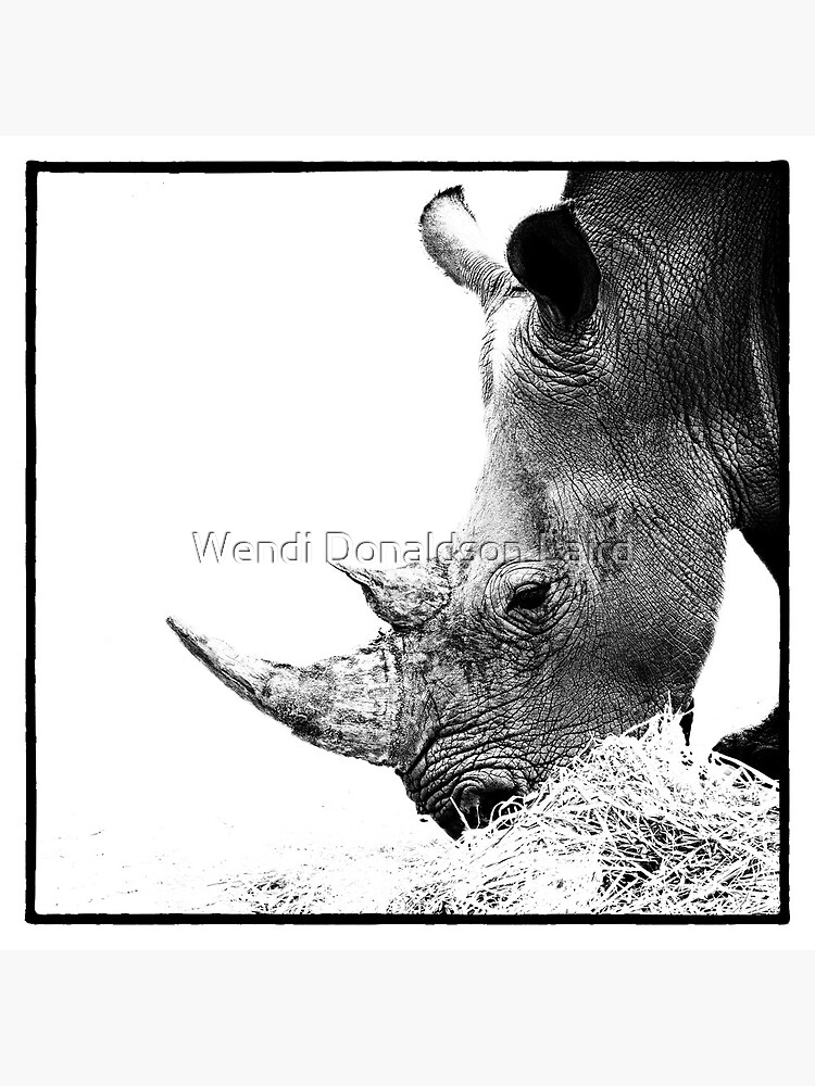 Rhino by wdonaldson