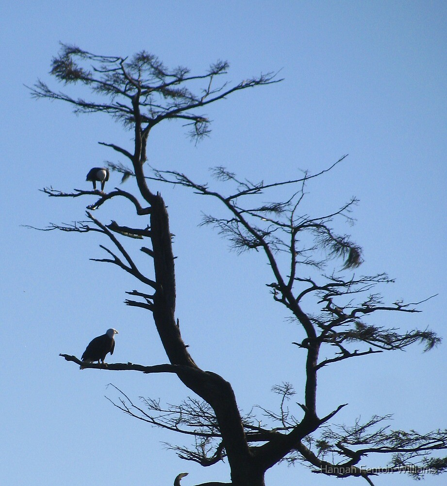 Bald eagles Oregon coast by Hannah Fenton williams