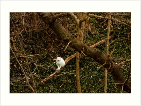 A Watcher by Daniel Owens