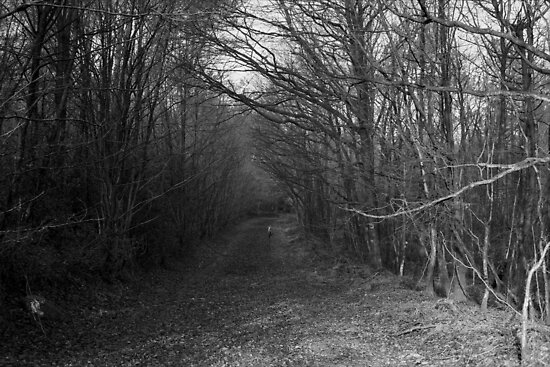 Path with Trees by RenX