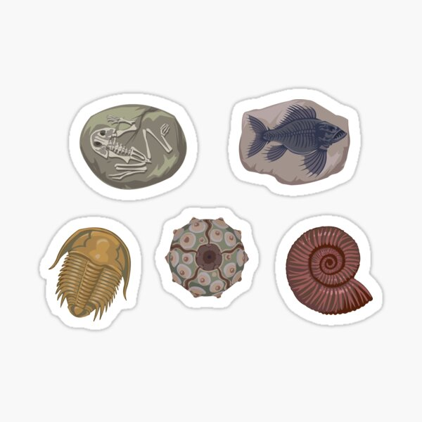 Fossil Collection Sticker
