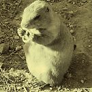 Prairie Dog Eating Pretzel by jollykangaroo