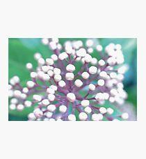 Flower 1 Macro Photographic Print