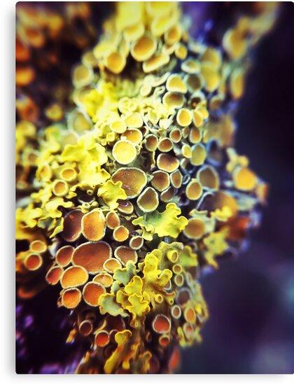 Lichen by Paul Duncan