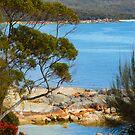 Fire of Bays blossom vista by Glen Johnson