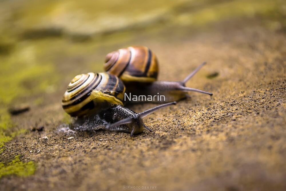 Friends by Namarin