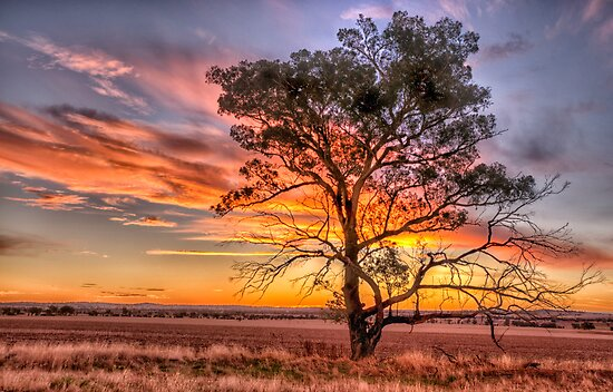Crossroads - Near Junee NSW - The HDR Experience by Philip Johnson