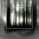 Forest by Robert Steadman