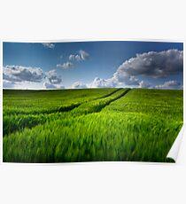 Green Field of Barley Poster