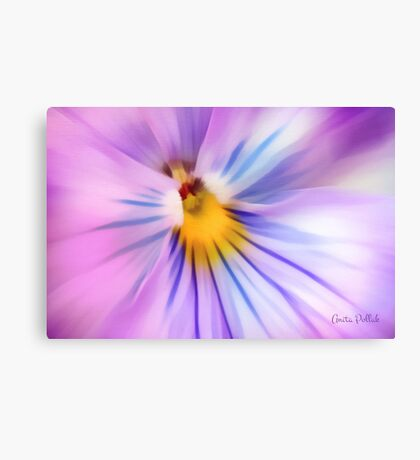 Party Time Pansy Canvas Print