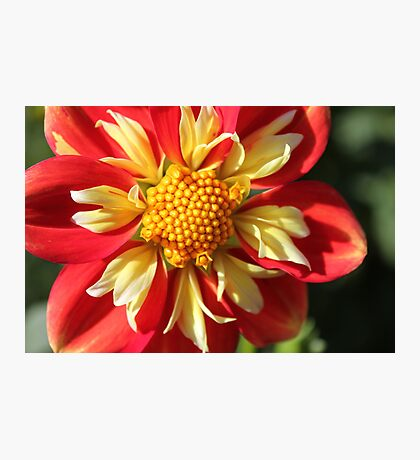 Unusual Dahlia.. Photographic Print