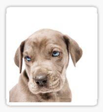 Great Dane Puppy  Sticker
