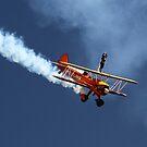 Wing Walker by Di Jenkins
