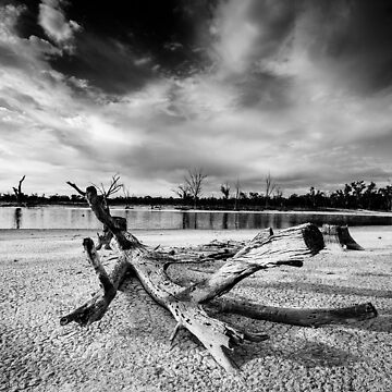Fallen tree in dry lake - Kings Billabong by hangingpixels