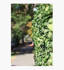 Random Hedge Photographic Print