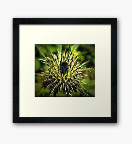 Uniquely Becoming Framed Print