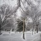 Snow-covered Path in a Scenic Park by Chantal PhotoPix