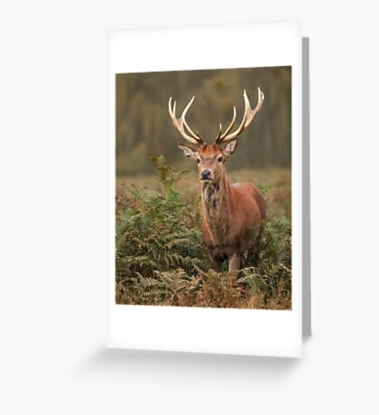 Majestic Red Stag Greeting Card