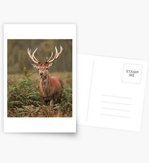 Majestic Red Stag Postcards