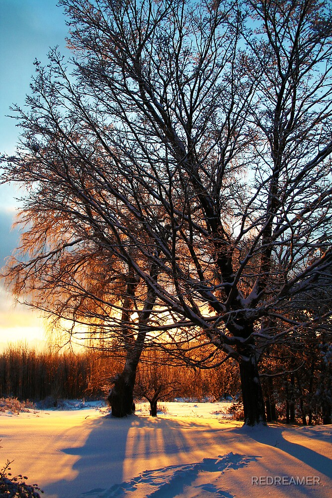 REDREAMING WINTER TREE by REDREAMER