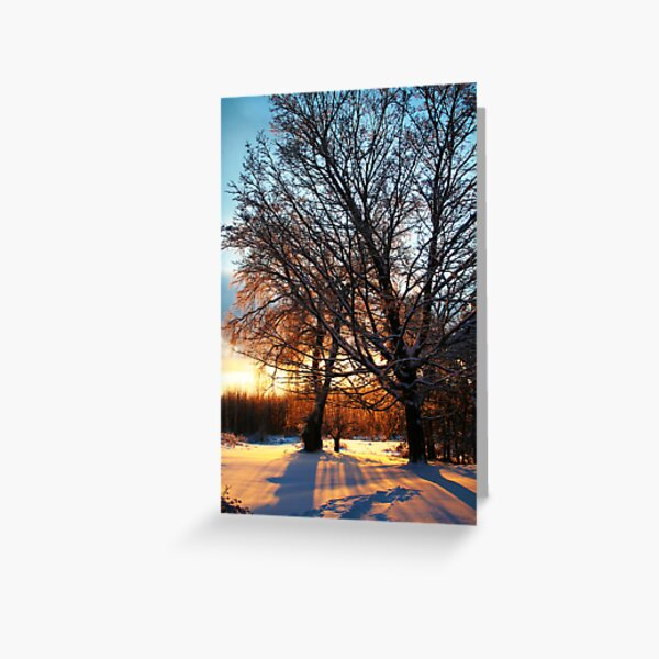 REDREAMING WINTER TREE Greeting Card