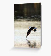 sunrise seabird Greeting Card