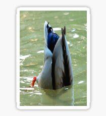 Bottom's Up Dabbling Duck Sticker