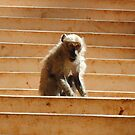Monkey on Stairs by Jennifer  Causley