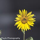 Sunny by Rick Playle