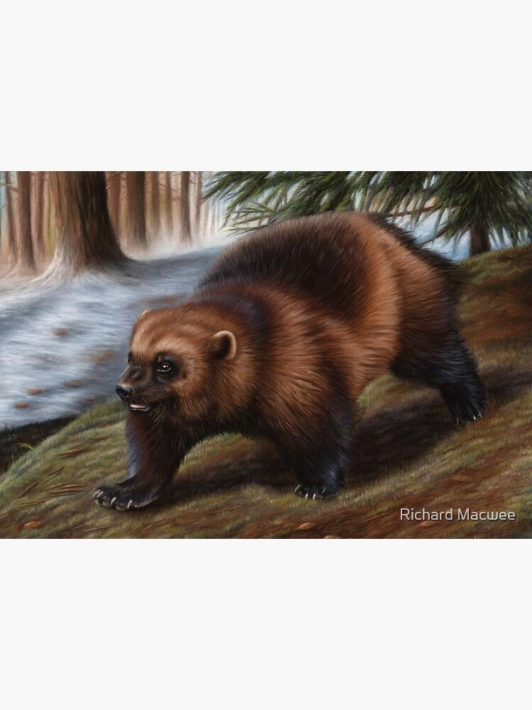 Wolverine Wildlife Artwork by richardmacwee