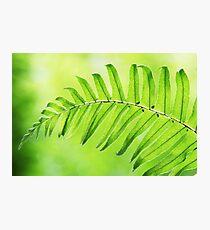 Lime Green Fern Leaf  Photographic Print