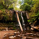 Lilydale Falls, Tasmania by SusanAdey