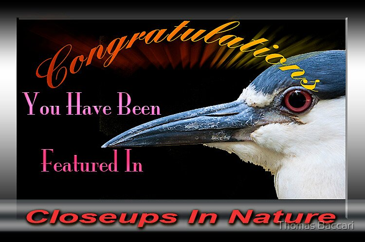 Closeups in Nature Banner by TJ Baccari Photography