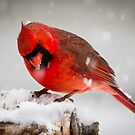 Red on White by Wayne Ross