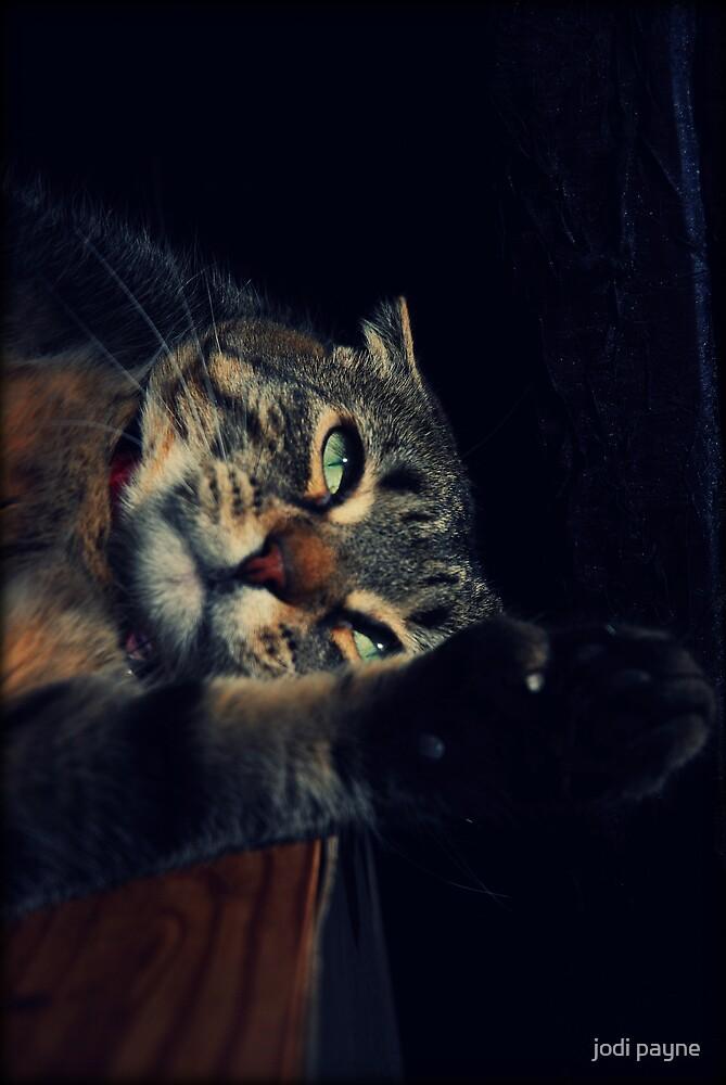 Wildcat Impression by jodi payne