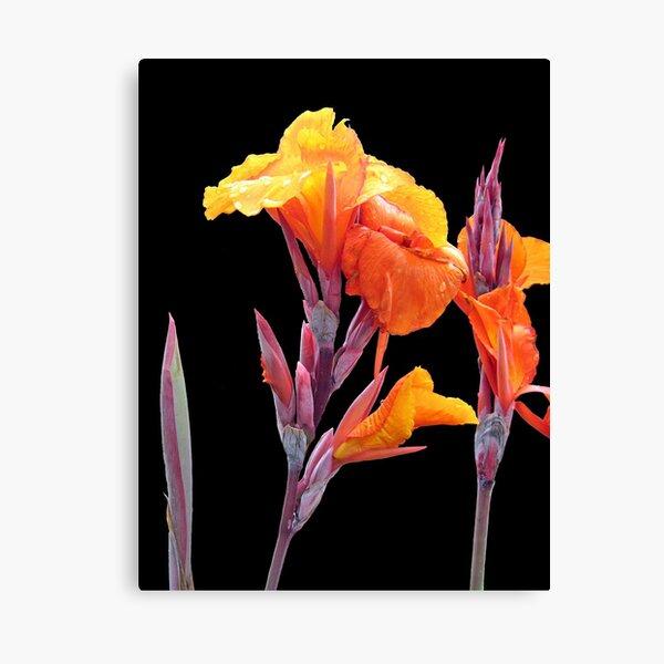 Orange Canna Lily Canvas Print
