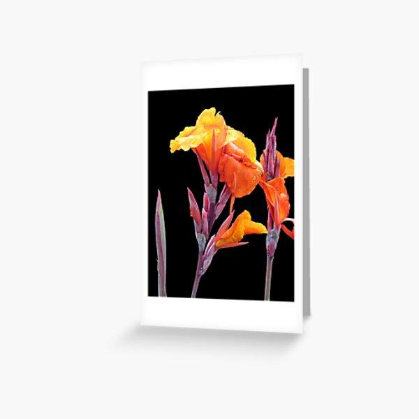 Orange Canna Lily Greeting Card