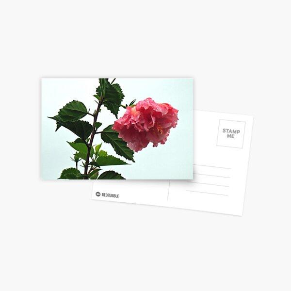 Jungle Hibiscus Postcard