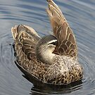 I will Hide  You Seek  ~ Duck ~ by Kym Bradley