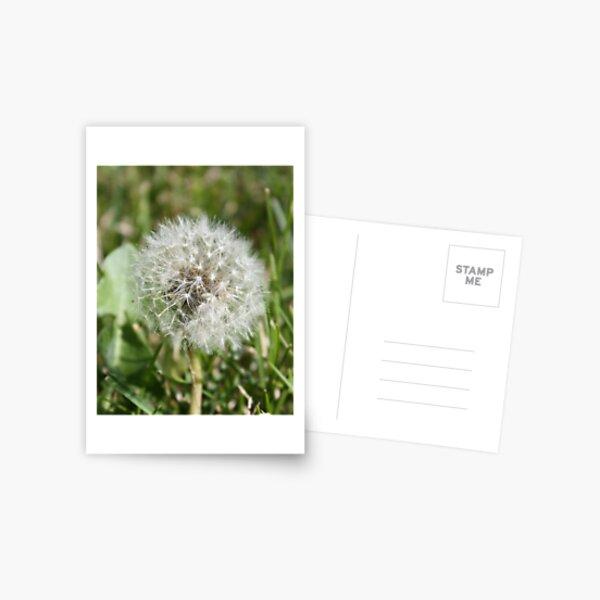 Dandelion Puff Postcard