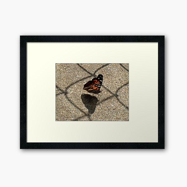 American Beauty Butterfly Framed Art Print