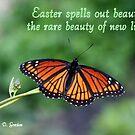 New Life in Christ by Paula Tohline  Calhoun